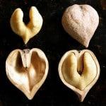 Heartnut01