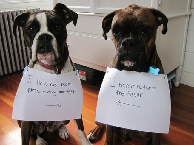 dogs-who-are-shamelessly-proud-of-what-they-just-did-26[1]