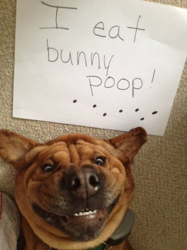dogs-who-are-shamelessly-proud-of-what-they-just-did-35[1]