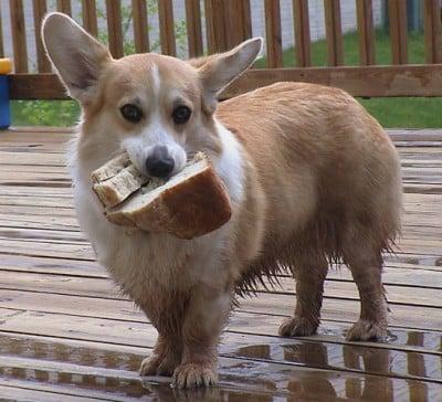 dirtydog-1