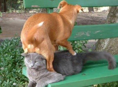 dog-sits-on-cat-bench-1268747623a
