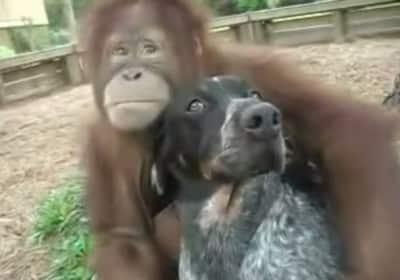 monkeydog