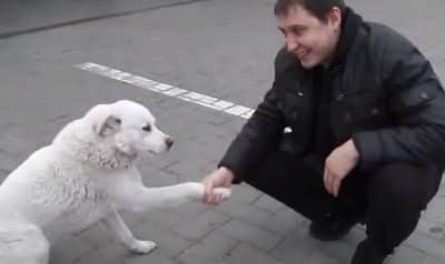 straydogfr1