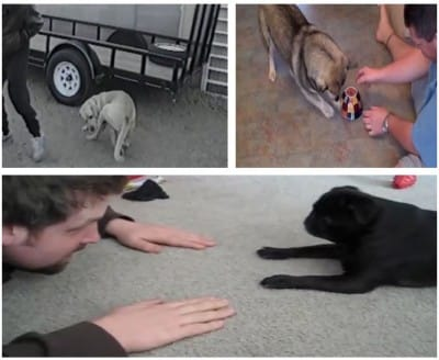 D11 These Hilarious Dogs' Funny Activities Will Give You Rib Tickling Entertainment!!!