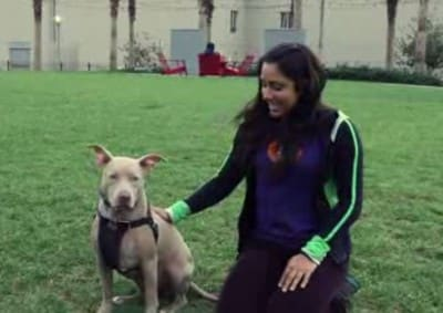 D14 Dog Lovers Sharing Their Reactions When They Meet Pit-bull First Time