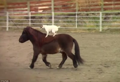 D21 Unconventional Story-Great Friendship Between A Dog And A Horse