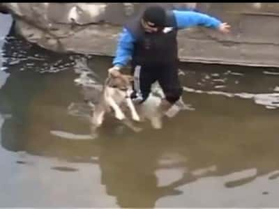 D6 Brave Man Saves The Drowning Cute Dog's Life…..It's Amazing=