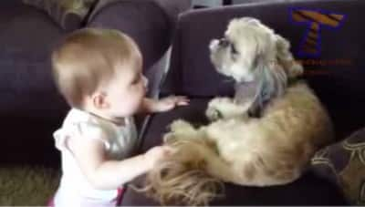 D7 Watch How Dogs And Babies Talk With Each Other While They Play