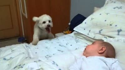 D9 How Amazing!!! This Adorable Puppy is Putting The Best Effort To See The New born Baby Clearly…