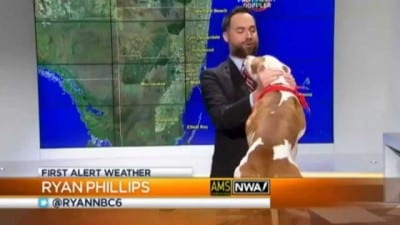 pitbull-interrupts-live-weather-800x450[1]