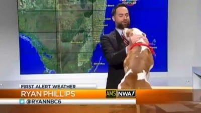 pitbull-interrupts-live-weather-800x450[1]