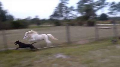dog-horse-running
