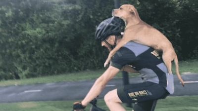 jarrett_dog_bike.PNG.653x0_q80_crop-smart